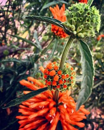 Los Rios Garden