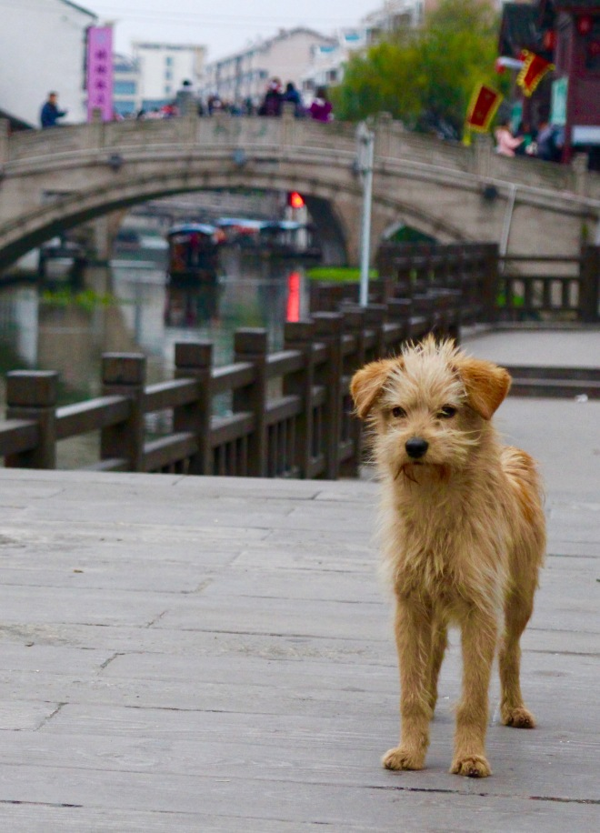 Qibao Bridge Dog