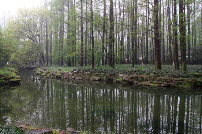 Hangzhou Forest