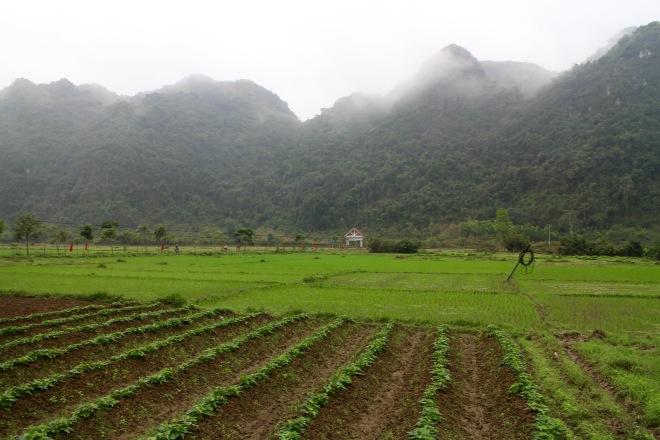 Vibrant Rice Fields