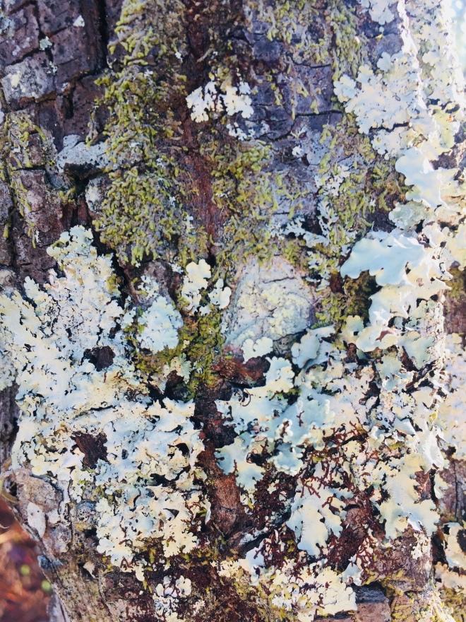 Preserve Moss