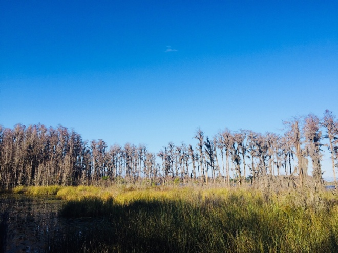 Preserve Woods