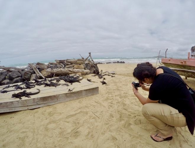 Hilcia Shooting Iguanas